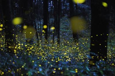 огоньки светлячков на поляне в лесу