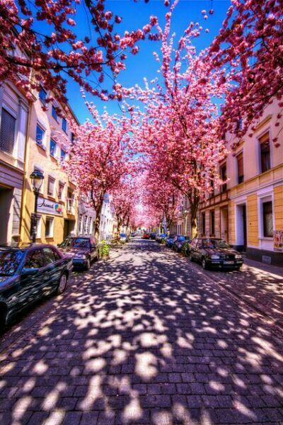 фиолетовая улица на фото