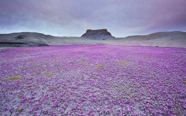 фиолетовое лето