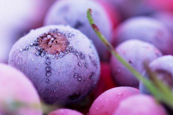 фиолетовые ягоды