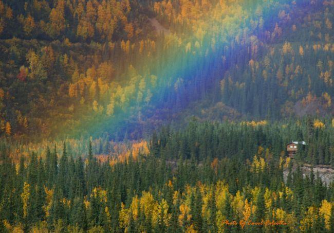 осенние цвета радуги