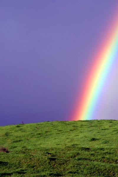 Волны из цветов фото