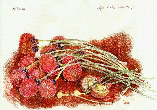 Картины карандашом Прокопенко