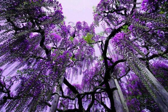 фиолетовый любимый цвет