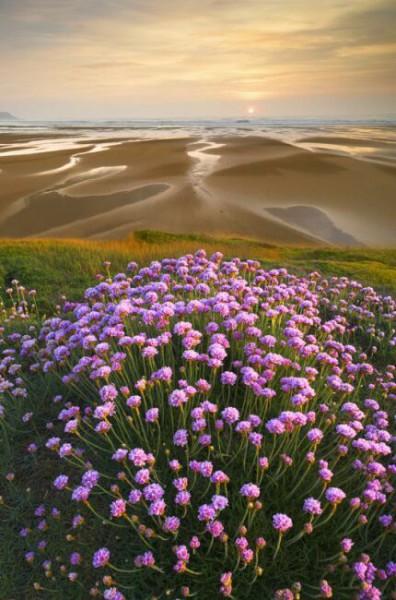 фиолетовое лето на фото
