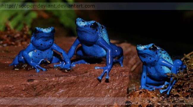 Синие лягушки на фото
