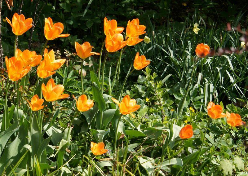 первоцветы весной