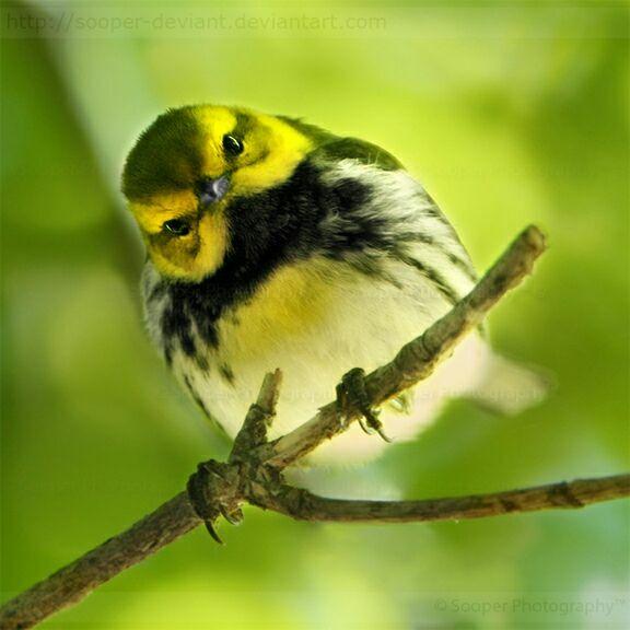 Птицы на фото