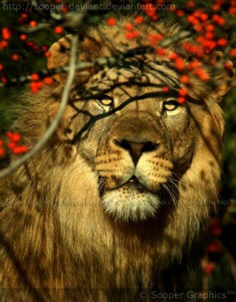 Лев на фото