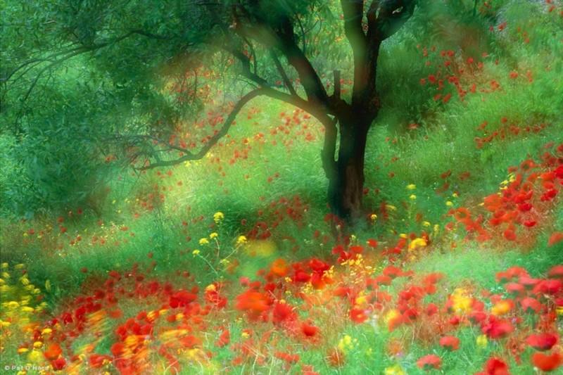 Живописная природа Pat O'Hara