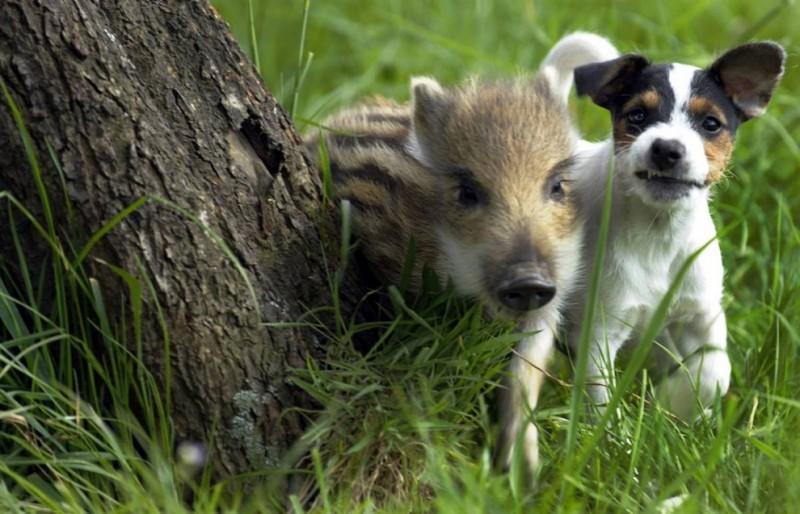 О дружбе между животными