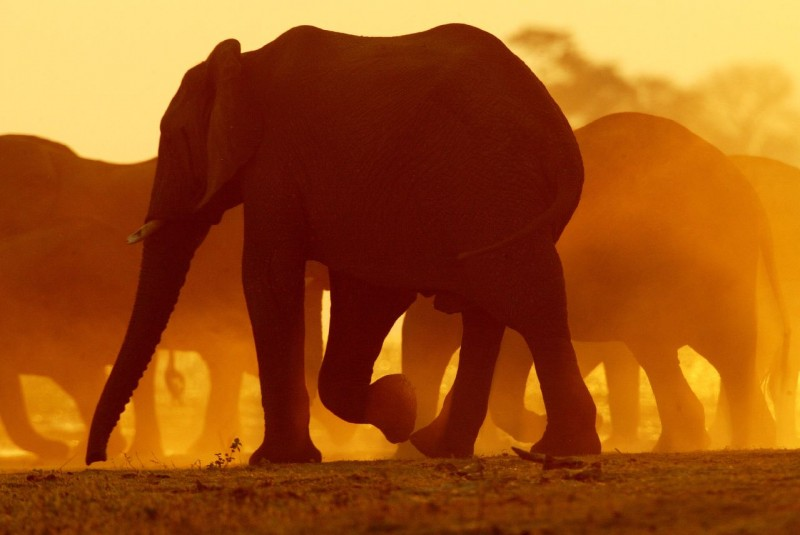 Фотографии Африки