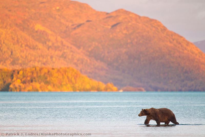 Природа Аляски  Патрик Эндрес