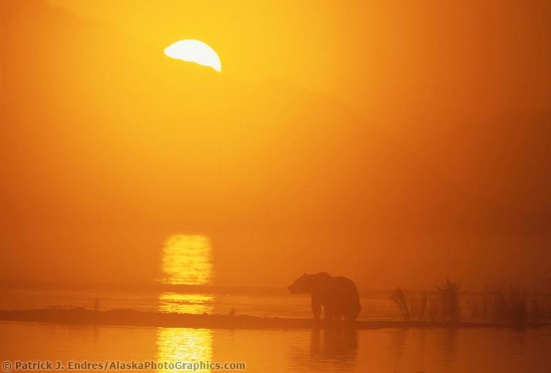 Животный мир Аляски Patrick Enders