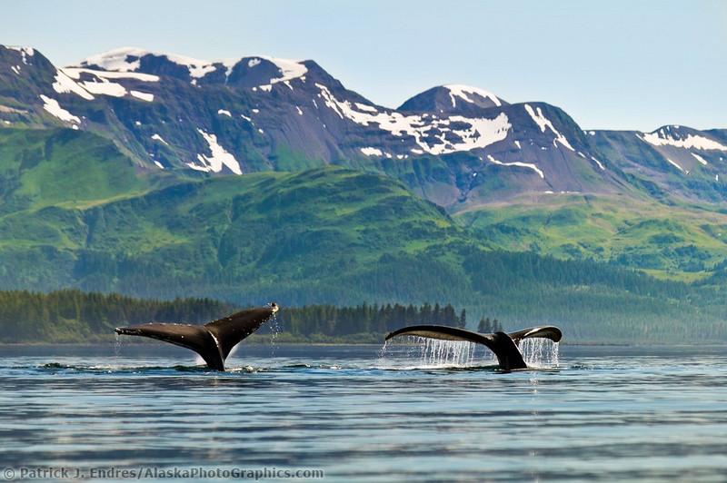 Животный мир Аляски от Patrick Enders