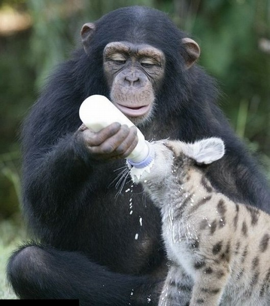 http://nasati.ru/wp-content/uploads/2012/06/animal_friendship_61-529x600.jpg