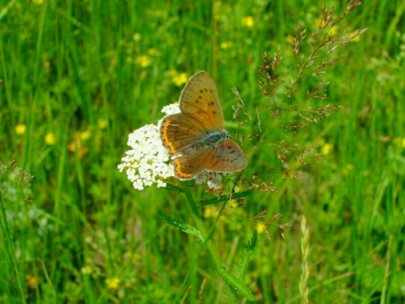 Счастливые дни лета Натальи Заболоцкой