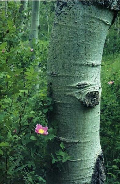 Фотографии дикой природы от Galen Rowell