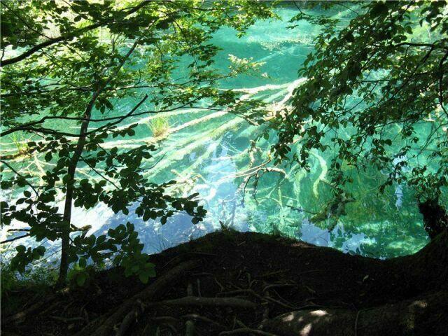 Ветки на дне озер  в Хорватии