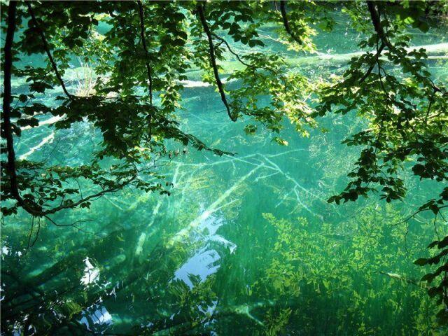 Прозрачность вод на Плитвицких озерах Хорватии