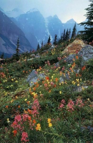 Фотографии дикой природы от Гален Роуэлла