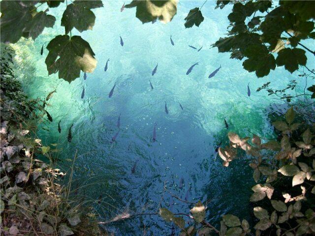 Рыбки на Плитвицких озерах в Хорватии