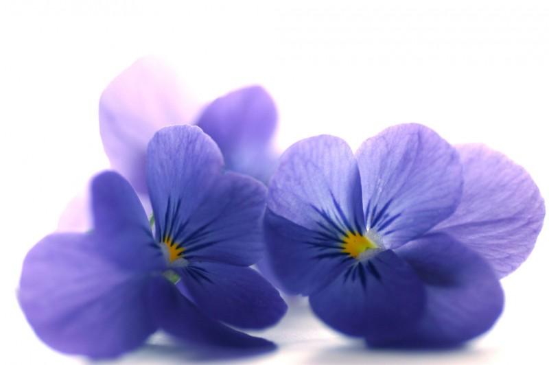 цветы акварели