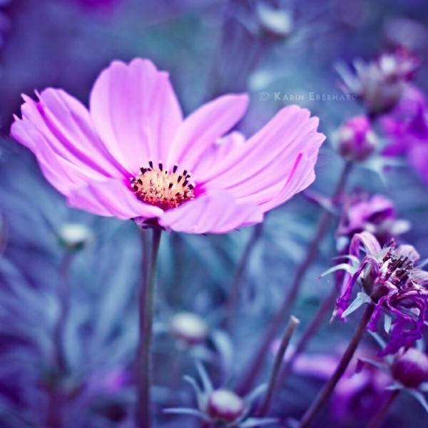 Цветы для Ольги