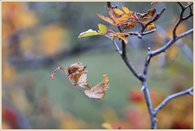 Осенние стихи на фото