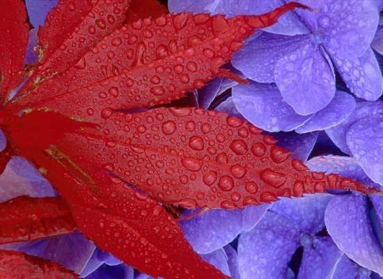 Осенние в картинках и стихах