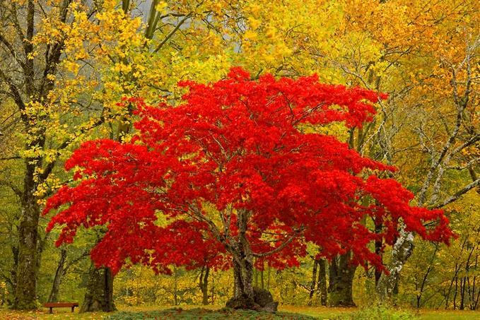 стихи про осень красивые