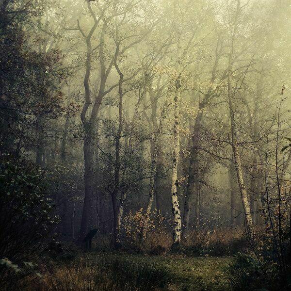 Осенние стихи в картинках