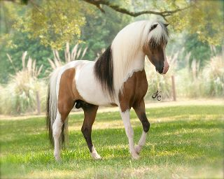 Цитаты о лошадях