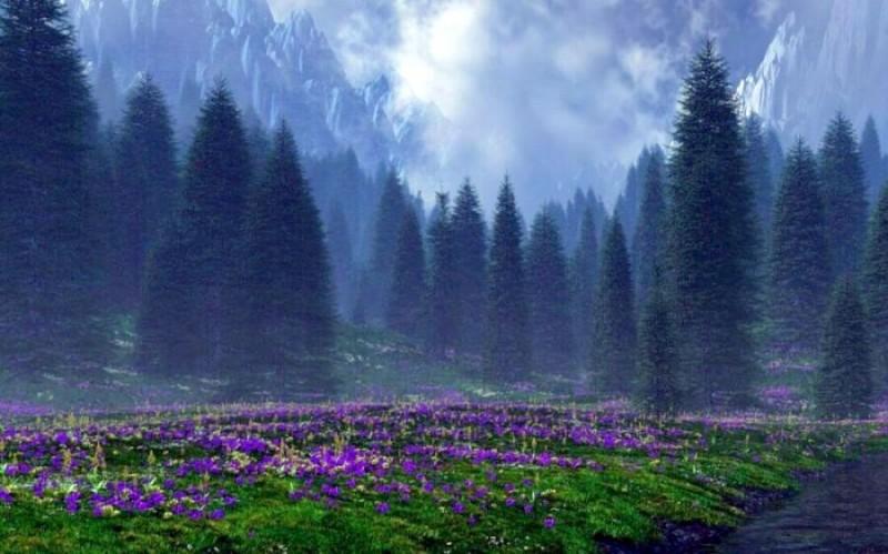 Волшебная страна чудес