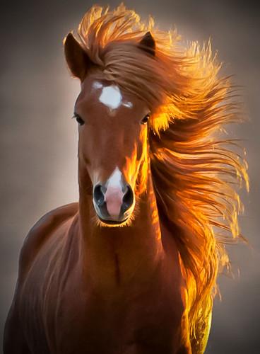 афоризмы про лошадей
