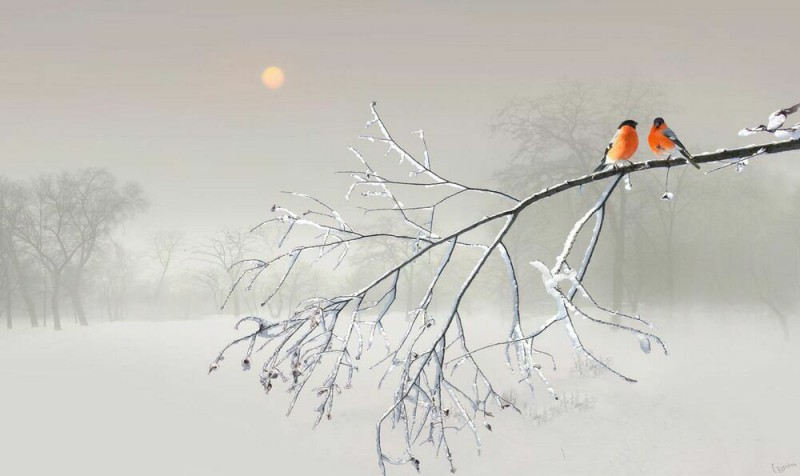 Ослепительная снежность от Игорь Зенин ©