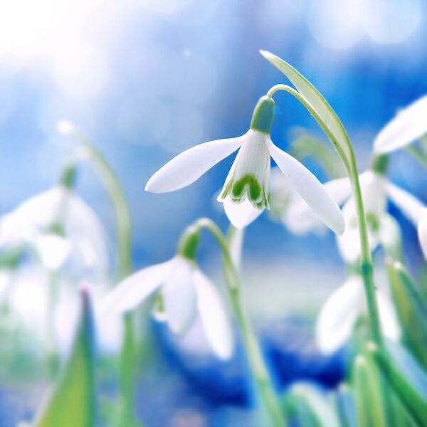 Вспомним о весне