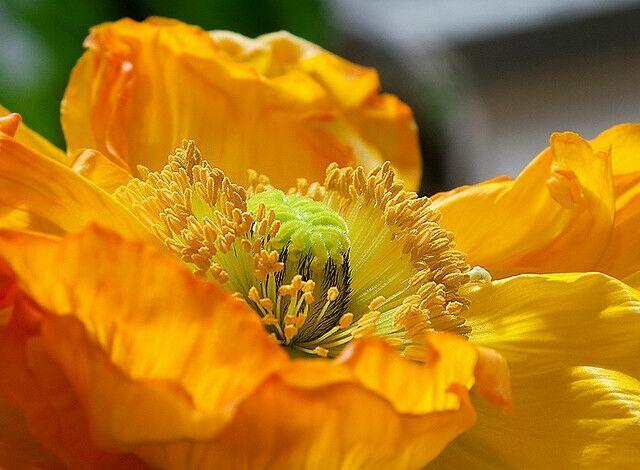 фото желтые полевые цветы