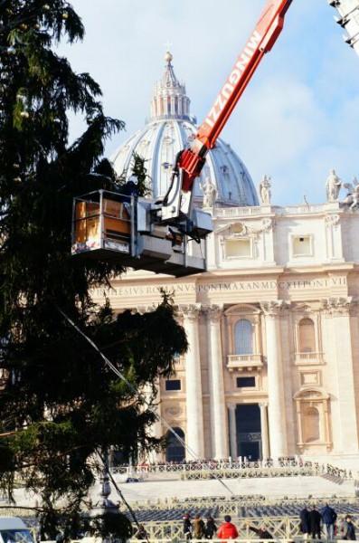 Рождественская елка Ватикана