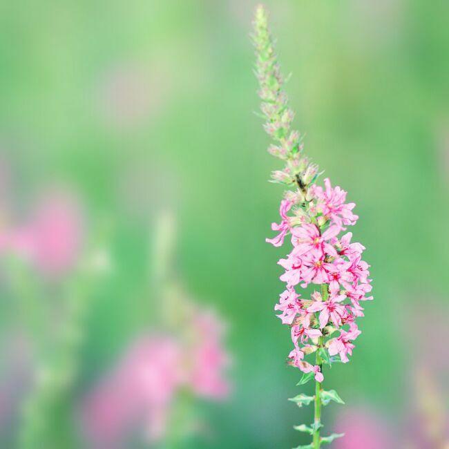 красивые весенние цветы фото