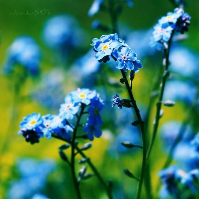 веснние цветы палитра