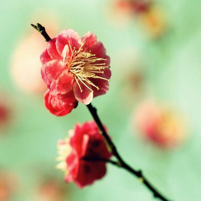 первые весенние цветы картинки