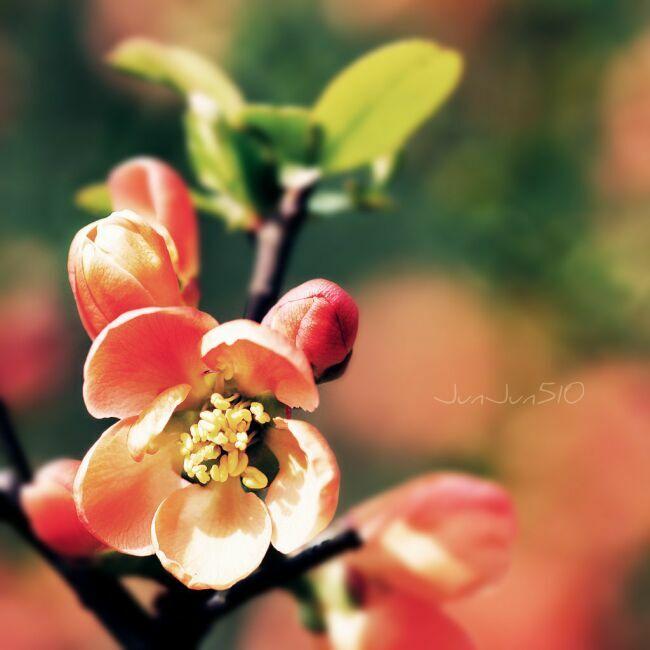 весенние цветы картинки фото