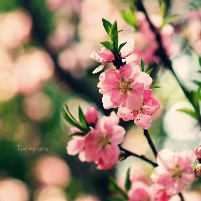весенние цветы в лесу