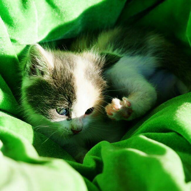 котенок на фото