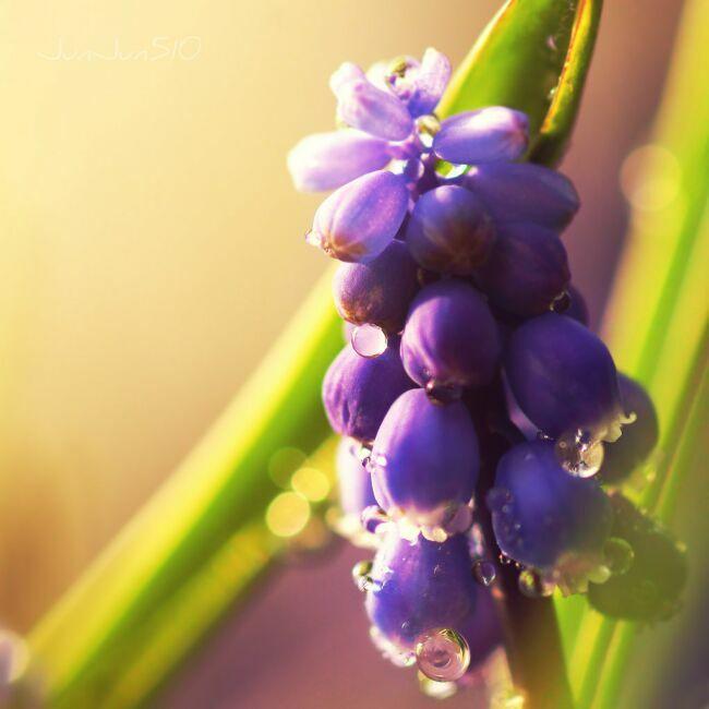 весенние букеты цветов фото