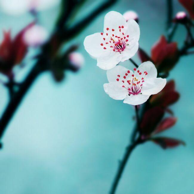 ранние весенние садовые цветы