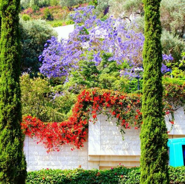Израиль, цветы города Хайфы