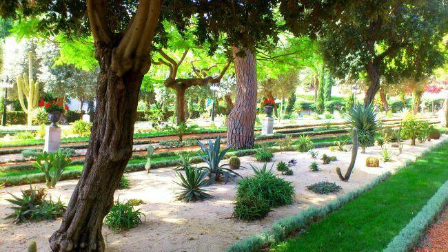 Аллея кактусов в Хайфе