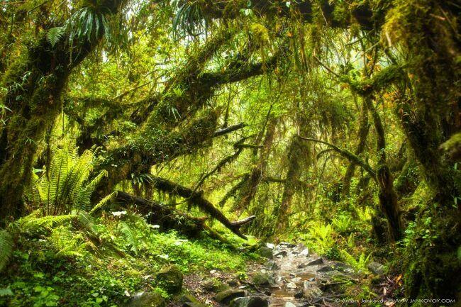 Непал фото тропических джунглей